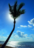 Back Lit Palm Tree. A back lit palm tree on the shore at Key West, Florida Stock Image
