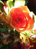 Back lit rose in autumn bouquet. Beautiful back lit rose in autumn bouquet Royalty Free Stock Photo