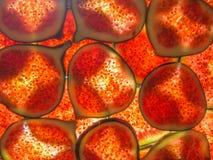 Back lit sliced ripe figs Stock Photo