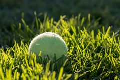 Back lit tennis ball sitting in the grass soaking in the afternoon sun stock photos