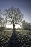 Back lit tree in snow Stock Photography