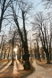 Back lit trees Stock Image