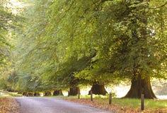 Back Lit Trees. Stock Photos
