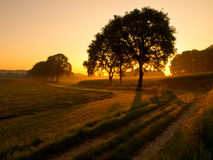 Back lit trees during sunrise Royalty Free Stock Image