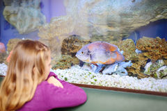 Back of little girl looking at fish in aquarium