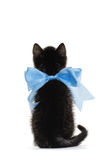 Back of little kitten with a bow Stock Image