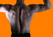 Back of a male body Royalty Free Stock Photography