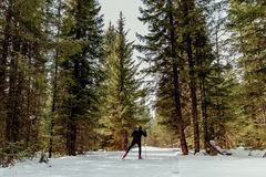Back male skier. Athlete pine forest snow trail Stock Photos