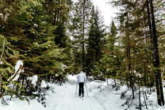 Back male skier. In a pine forest in winter classic style Stock Image