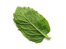 Back of a Mint Leaf. Back/under of a mint leaf royalty free stock images