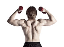 Back muscles Stock Photography