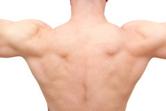 Back of muscular body builder man. Muscular young man body building Stock Images