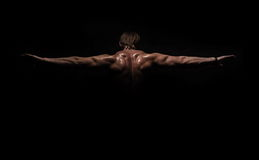 Back of muscular bodybuilder Royalty Free Stock Image