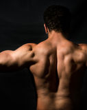 Back of muscular male bodybuilder stock image