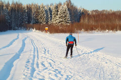 Back of nonpro skier riding on track near forest Royalty Free Stock Photo