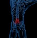 Back pain. 3D render of a medical skeleton illustrating back pain Royalty Free Stock Image