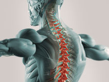 Back pain illustration. Illustration of man's back with spine highlighted in red as metaphor for chronic pain Stock Photography