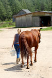 Back from the pasture to the stable. Woman leading a horse to the stable. Westrn City on June 24, 2012 in Sciegny, Poland. Western City is a replica of Wild West Royalty Free Stock Photo