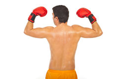 Back of powerful boxer man Royalty Free Stock Photography