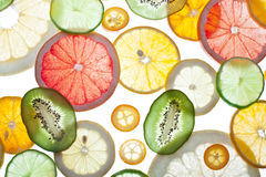 Back projected citrus slices. Stock Image