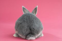 Back of a rabbit. Rabbit on pink background from behind Stock Photo