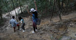 Back Rear View Of Group Of People Moving Downhill In Forest, Tourists On Hike Trekking Wood Path On Active Vacation Trip. Slow Motion 60 stock footage
