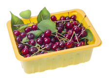 Back red cherries in container Stock Image