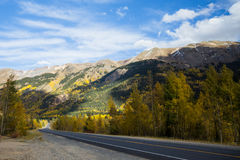 Back road through mountains with changing trees of Colorado Stock Photos