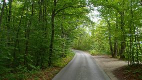 Back road through the woods in Croatia. Europe. stock video