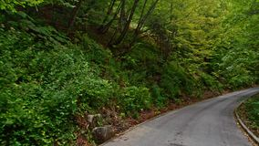 Back road through the woods in Croatia. Europe. stock footage