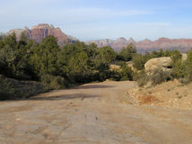 Back Road in Zion Stock Photo