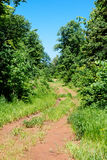 Back rural roads during summer Royalty Free Stock Photo