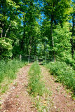 Back rural roads during summer Royalty Free Stock Photos