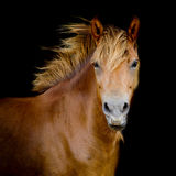 Back shot of a horse Stock Photography