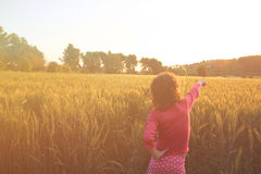 Back side of happy kid looking at the sunset in wheat field , explore and adventure concept Royalty Free Stock Photo