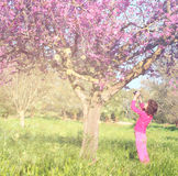 Back side of happy kid near the cherry blossom tree , explore and adventure concept. glitter overlay Stock Images
