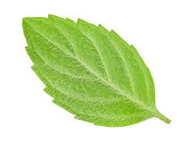 Back side of leaf mint isolated Stock Photography