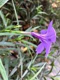 Purple flower. Back side of purple flower royalty free stock photo