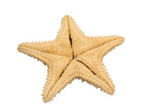 Back side of starfish Stock Images