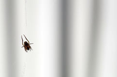 Back of a Spider in a web Royalty Free Stock Images