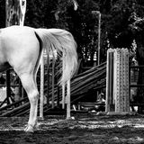 Back of a white horse Stock Photo