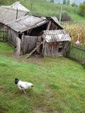 Back to basics , in nature, chicken barn Royalty Free Stock Photography