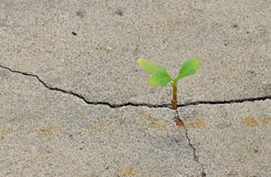 Back to life, new hope. New plant budding on concrete floor. Concept of good future and hope Royalty Free Stock Photos
