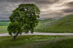 Back to life. View of the King's graves and a tree during the Spring in Gamla Uppsala, Sweden stock photography