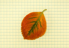 Back to school.Autumn leaf on a school notebook Royalty Free Stock Photos
