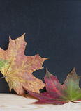 Back to school autumn leaves. Stock Photos