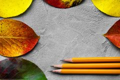 Back to school concept. Top view image of pencils next to autumn leaves over gray texture background. Creative flat lay leaves with copy space royalty free stock photo