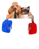 Back to School. Dog with a cat and a backpack for the white banner Royalty Free Stock Photo
