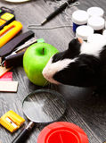 Back to school. Guinea pig and green apple Royalty Free Stock Images