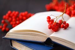 Back to school: rowan branch and books. School autumn theme royalty free stock images